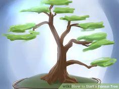Image titled Start a Bonsai Tree Step 1