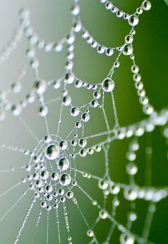 Pearls of dew on a spider's web