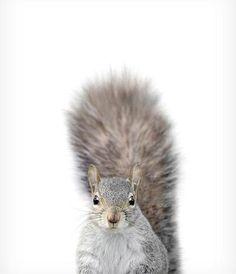 Baby Squirrel Print