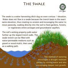 Permaculture swale - slow it, sink it, store it - best water management technique Forest Garden, Rain Garden, Water Garden, Aquaponics System, Hydroponics, Organic Gardening, Gardening Tips, Vegetable Gardening, Container Gardening