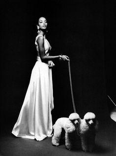 Poodles in Vogue