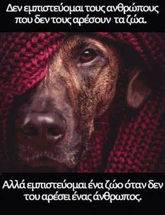 Nai! Smart Quotes, Me Quotes, Funny Quotes, Great Words, Wise Words, Friends In Love, Best Friends, Love Your Pet, Happy Animals