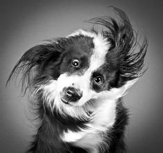 High speed #photography - The silly & cute expression of a dog shaking off water.