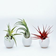 Hanging ceramic air plant holder, hanging air planter (price is for one) includes air plant!