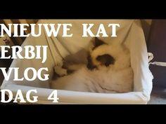 KATTEN | Nieuwe kat in huis VLOG DAG 4