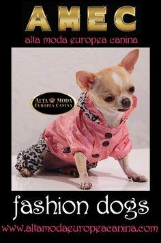 amec, moda canina de lujo