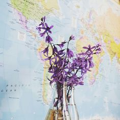 """You don't always have to go somewhere else to see something new "" - Rachel Swanepoel  #adventure #Brazil #Petria #spring #wanderlust #maps #purple #flowers"