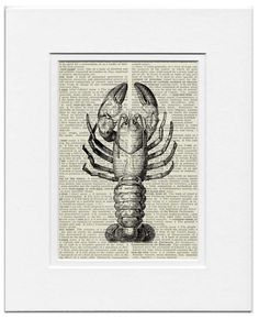 vintage crayfish artwork