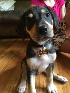 My new puppy!!!!