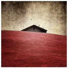 La foto sembra un sogno: quando lo scatto è poesia