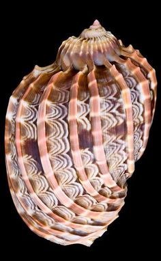 Dizemos adeus ao verão: as conchas incríveis para inspiração