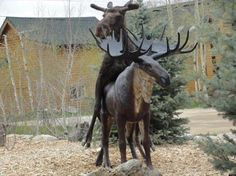 Moose sex toy Dump A Day Funny Pictures Of The Day - 74 Pics