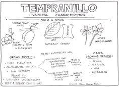 Tempranillo Characteristics