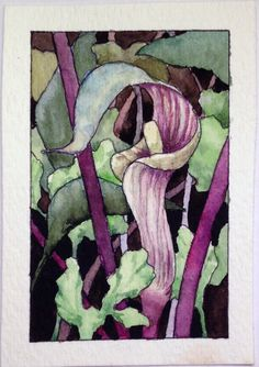 ACEO Original Watercolor Painting JACK-IN-THE-PULPIT by W.Scholes, signed | eBay