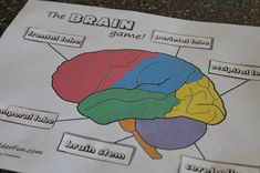 Wk 4  - Brain worksheet, puzzle and playdoh activity. From The Mrs.: The Nervous System for Kids: The Brain
