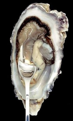 "oysters are a perfect starter ""Repinned by Keva xo""."