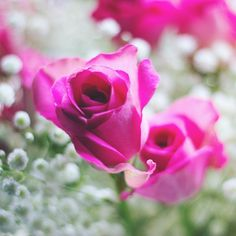 Pretty pink flowers snaphappybritmums pinterest flowers roses mightylinksfo Gallery