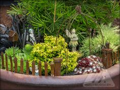 The Amazing World of Conifers | garden design with conifers