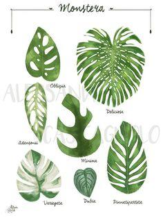 House Plants Decor, Plant Decor, Exotic Plants, Tropical Plants, Planta Alocasia, Plante Monstera, Indoor Plants Names, Pot Jardin, Decoration Plante