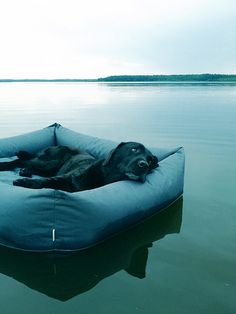 Waterproof dog beds | Pawsh Magazine #dog #dogbed