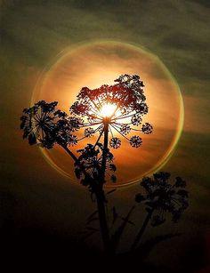Bubble Sunset  ♥ ♥  www.paintingyouwithwords.com