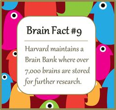 Brain Facts from DaisyBrains.com.