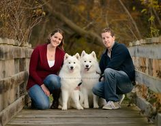 twin cities pet photographer.  Family photos with two white fluffy Samoyed dogs. Fall family portraits with puppies.