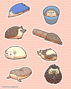 Coming to your nearest Anime-Expo! Hedgehog Pet, Cute Hedgehog, Funny Animal Memes, Funny Animals, Hedgehog Accessories, My Cute Love, Anime Expo, Cute Little Animals, Cute Wallpapers