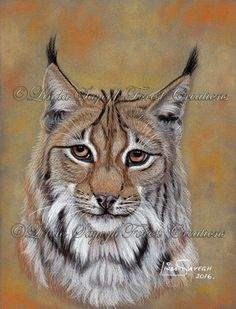 Lynx by Artsy50.deviantart.com on @DeviantArt