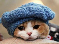 PEDRO HITOMI OSERA: Russos preferem gatos a cachorros