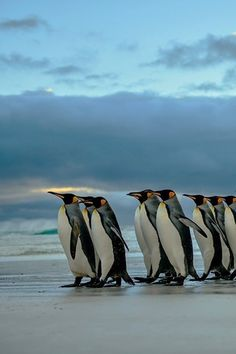 King Patrol by Mark Roberts via 500px.