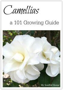 Camellias Southern Plantation Soap Set Health & Beauty New Harmonious Colors