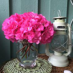 Pelargon-blommor
