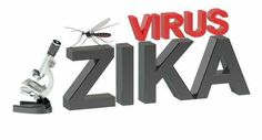 This is how Zika virus infects developing brain