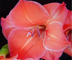 Google Image Result for http://orchidflowers.files.wordpress.com/2011/04/gladiolus-flower.jpg