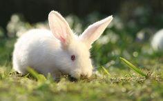 Rabbit Wallpaper
