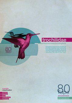 trochilidae by shumiski, via Flickr