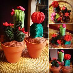 Happy with my cactusssss! #crochet #crochetcactus #cactus