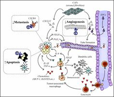 The Role of Chemokines in Cancer