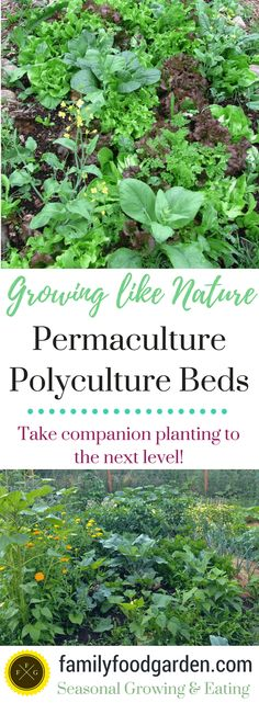 Polyculture permaculture gardening