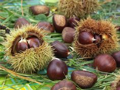 Science et nature Fruit And Veg, Fruits And Vegetables, Fall Fruits, Exotic Fruit, Fall Photos, Seeds, Wedding Decorations, Coconut, Autumn