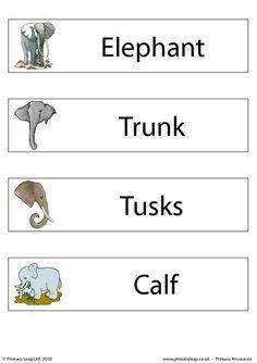 Set of 4 flashcards - Elephant