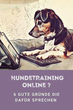 Das Online-Training steckt im Bereich des Hundetrainings noch in den Kinderschuhen. Wir nenne 6 gute Gründe warum es eine gute Alternative zum offline Training sein kann. Terrier, Movie Posters, Movies, Dog Training School, Dog Owners, Pooch Workout, Films, Film Poster, Cinema