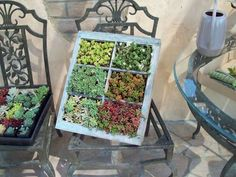 Great Idea for an Old Window!!!
