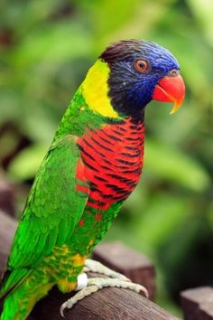 colorful parrot picture