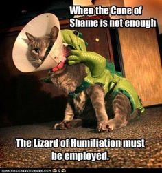 Humiliation Unlocked ! :)