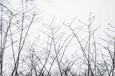 The Light Painters Loft | Twigs