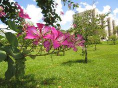 Flor do cerrado. Brasilia.