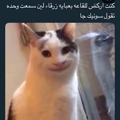 Funny Baby Quotes, Funny Memes Images, Funny Picture Jokes, Funny Kpop Memes, Cartoon Memes, Funny Video Memes, Funny Photos, Arabic Memes, Arabic Funny