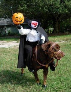 Lustige Halloween Kostüme für Hunde oder Katzen: Canine Ichabod Crane.